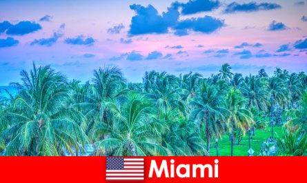 महान उष्णकटिबंधीय जंगल के साथ मियामी आश्चर्यजनक प्रकृति