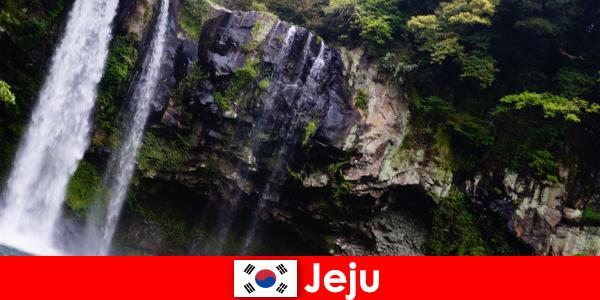 दक्षिण कोरिया में जीजू विदेशियों के लिए आश्चर्यजनक जंगलों के साथ उपोष्णकटिबंधीय ज्वालामुखी द्वीप