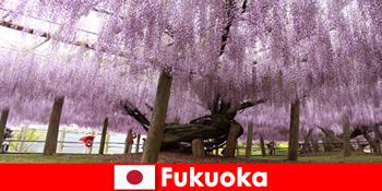 फुकुओका जापान के अछूते प्रकृति में अजनबियों के लिए प्रकृति यात्राएं