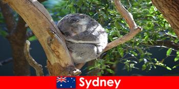 गंतव्य सिडनी ऑस्ट्रेलिया रातोंरात अनुभव के साथ विदेशी चिड़ियाघर में