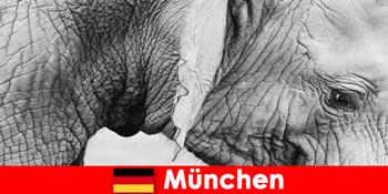 जर्मनी म्यूनिख में सबसे मूल चिड़ियाघर के लिए आगंतुकों के लिए विशेष यात्रा
