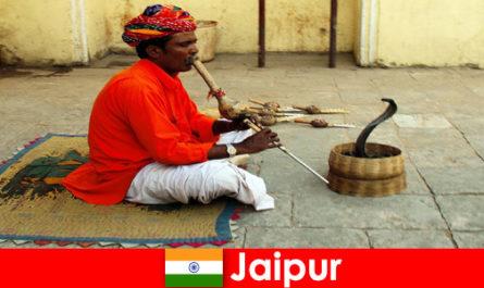 जयपुर भारत में, छुट्टियों की हलचल सड़कों में सांप नृत्य और मनोरंजन का अनुभव